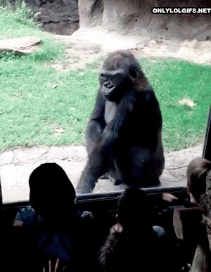 "*Kid* ""Hey! Ugly dude!"" * Taunting hand gestures*  *Kid* ""Yeah I'm looki-"" *Awesome gorilla* "" BOO!"""