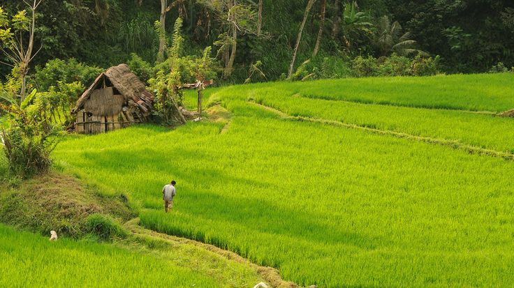 On the Promising Land, Bali