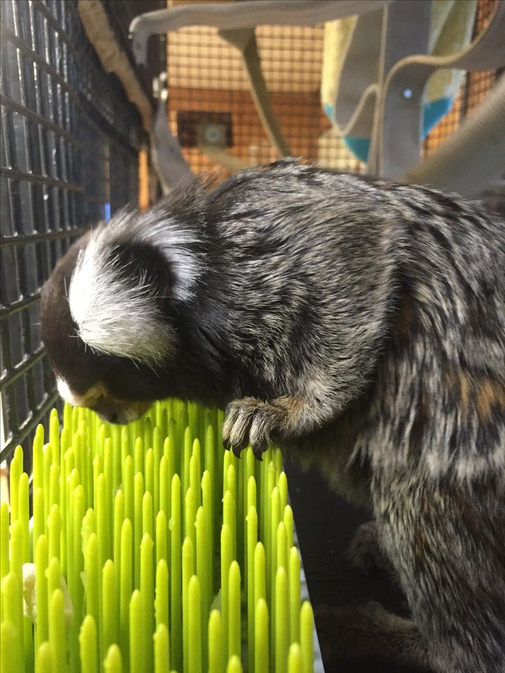 1000 Images About Animal Enrichment On Pinterest Open
