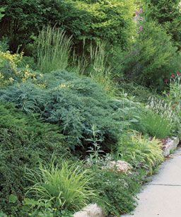 Year-round anchors. A creeping blue juniper cascades on a rocky slope and serves as a centerpiece among seasonally changing plantings.