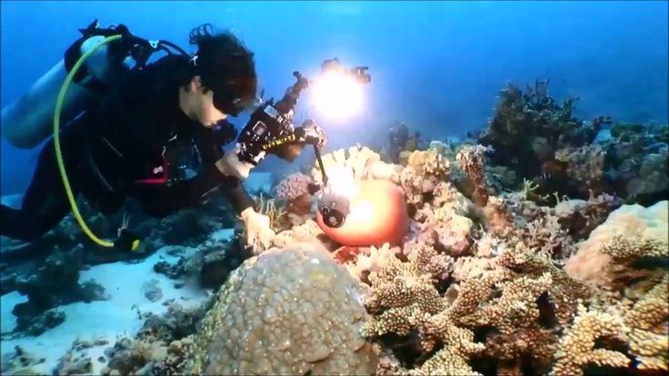Zero-Project - Silence  (Underwater Mysteries)