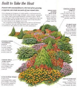 this picture inspired the idea of using dwarf, upright conifers as a backbone along the south side of the front yard.