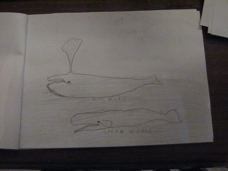 Ria's drawing of the Whaler's prey