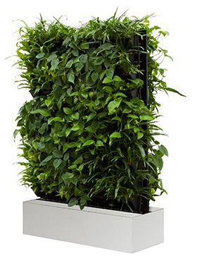 groene verticale wand voor op kantoor . Verfrist de lucht ,verbetert de werkomgeving en dit zijn nog maar een paar voorbeelden van planten op kantoor