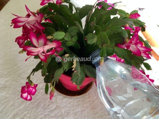 Conseils Pour Bien Arroser Les Cactus Et Plantes Grasses A