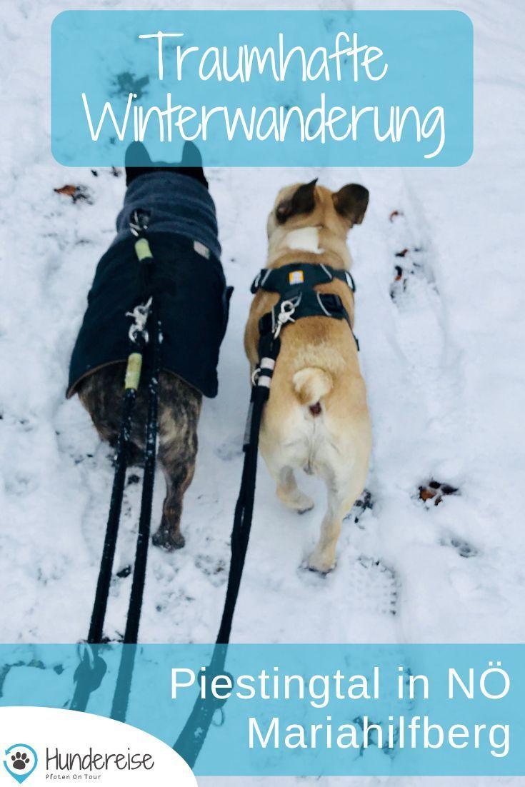 Winterwanderung Mit Hund Am Mariahilfberg Hund Unterwegs Hunde Und Urlaub Mit Hund