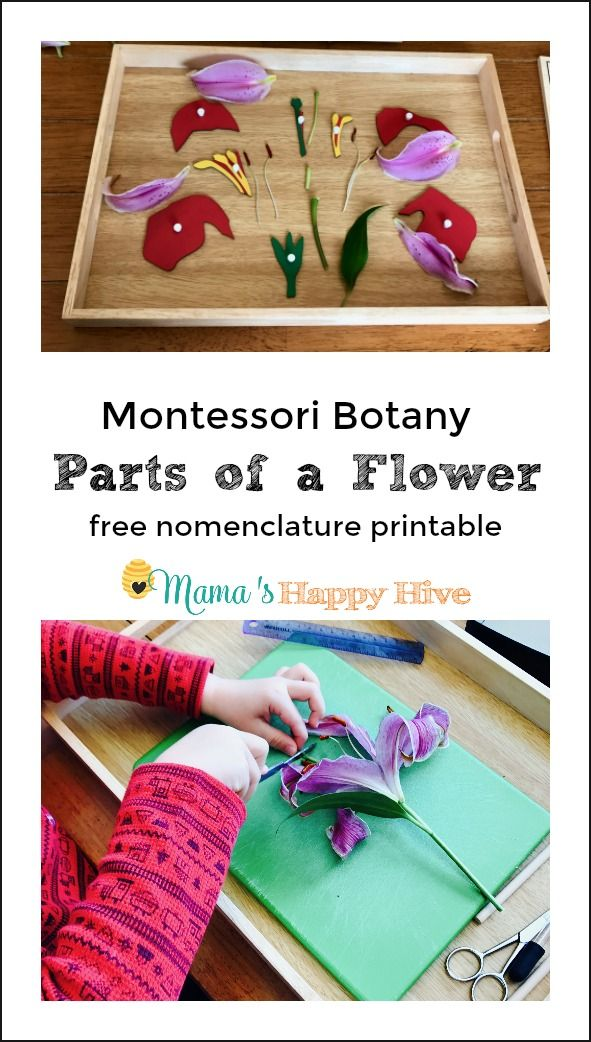 In this Montessori botany lesson we observed and examined the flower, dissected the flower parts, and used the Montessori flower puzzle for matching work.