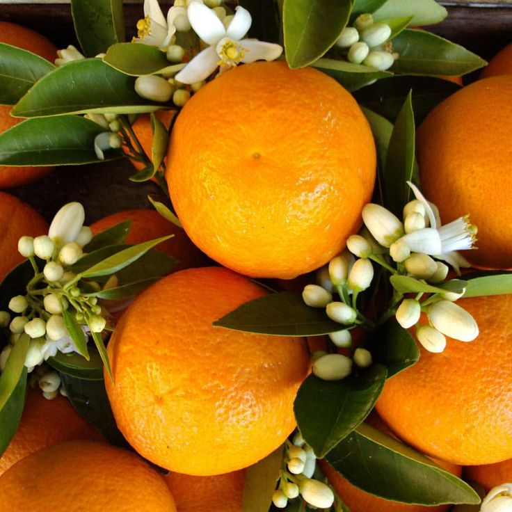 190 vind-ik-leuks, 10 reacties - RAMÓN MONEGAL (@ramonmonegal) op Instagram: 'ENTRE NARANJOS  It's oranges season 🍊. On my fiftieth birthday I recreated a courtyard of orange…'