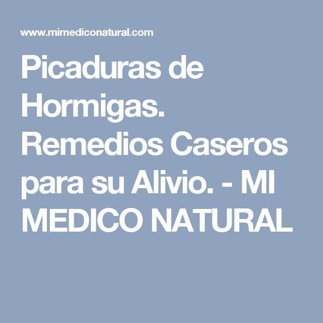 Picaduras de Hormigas. Remedios Caseros para su Alivio. - MI MEDICO NATURAL