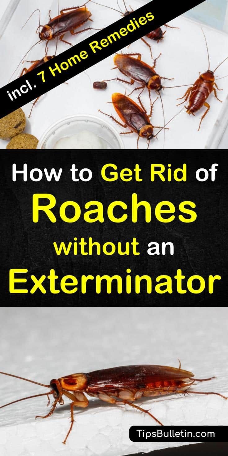 how to get rid of german roaches without an exterminator