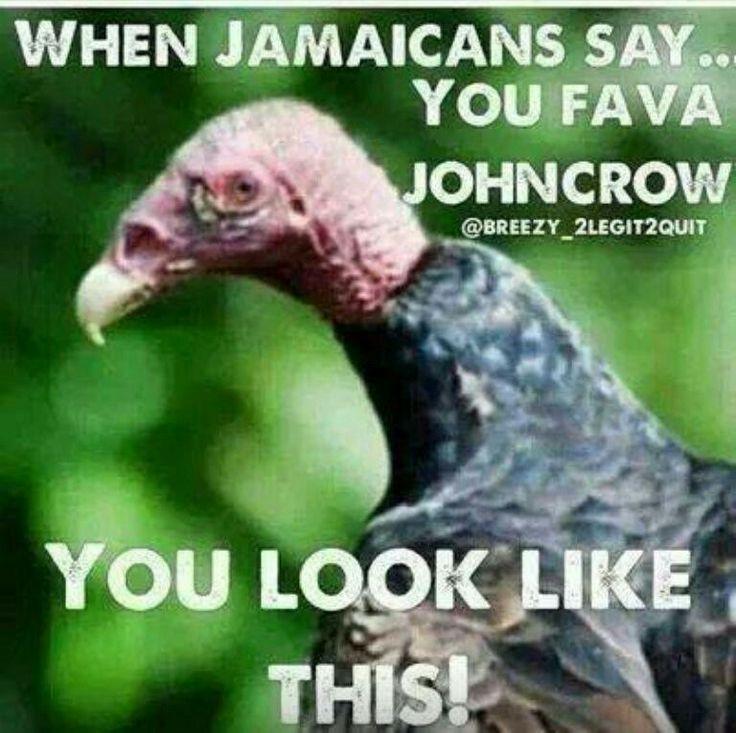 John Crow, Jamaican vulture