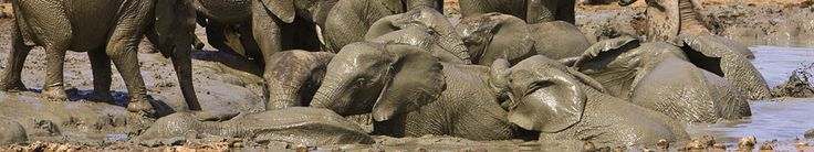 Addo Elephant national park - The only place to see the dynamics of elephant packs upclose!