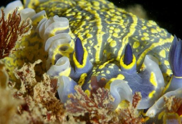 Морские животные фото - похожи на инопланетян - Морской слизняк