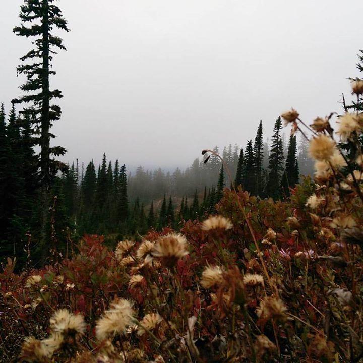 Amazing landscapes glacier volcano! At mount Rainier  #Washington #mountianlove #mountianhikes #natureisawesome #travel