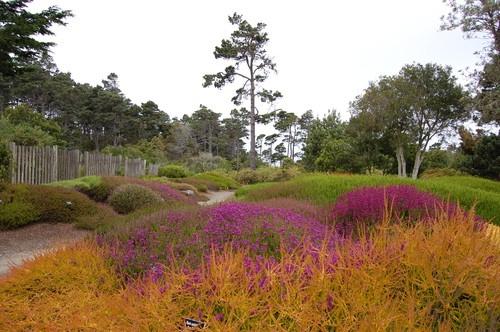 31 Best Rain Gutter Gardens Images On Pinterest