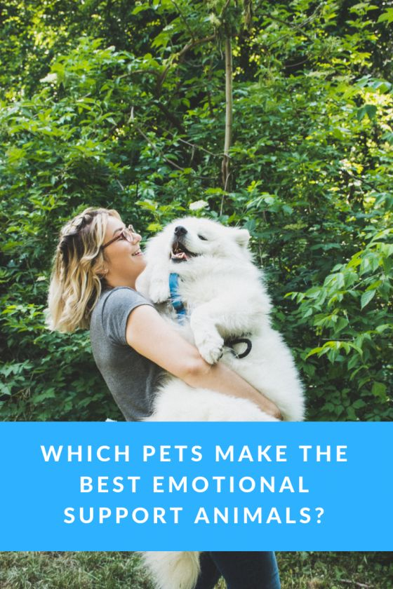 Which Pets Make the Best Emotional Support Animals ...