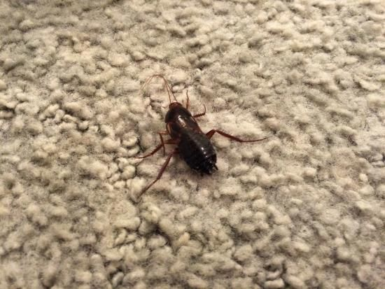 Marvelous Bug On A Rug   Google Search