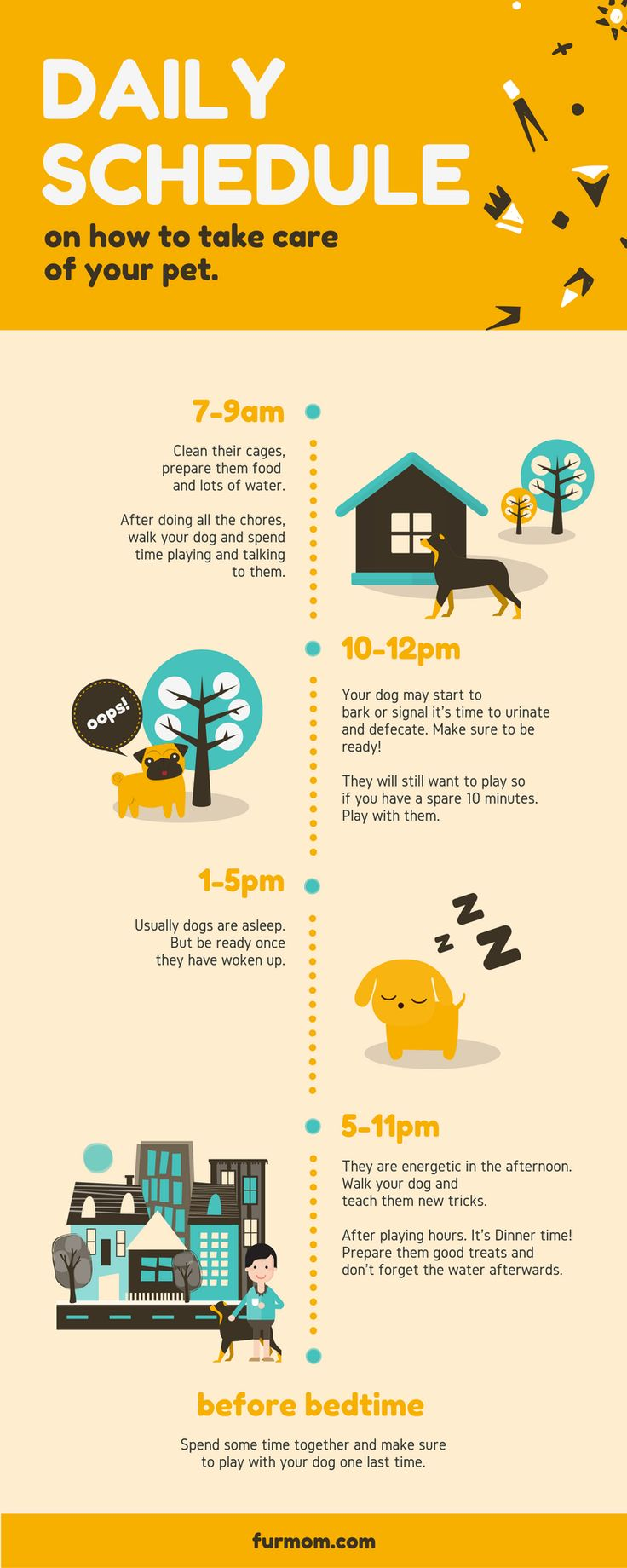 Best Daily Routine For Dogs