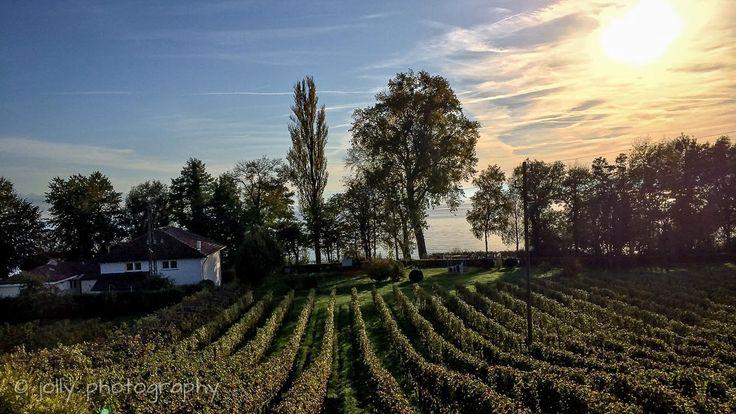 Coole Winzer-Unterkunft am Bodensee - mit Seeblick :)