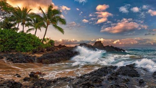 Viharos tengerpart, Természet,pálmafák,tenger