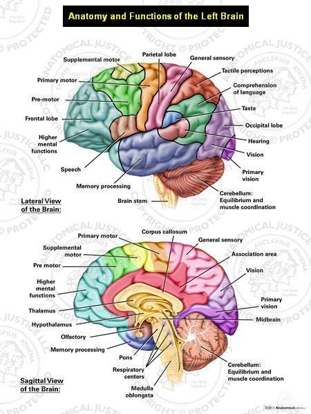 Anatomy Study Guide for Health Students | Kenhub