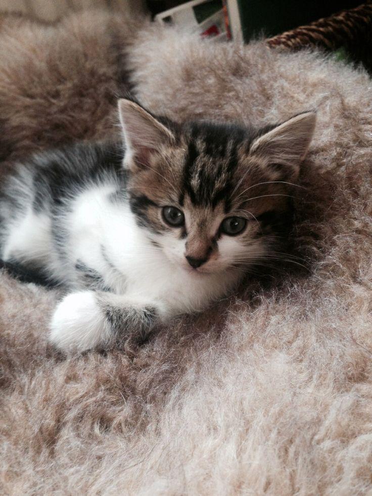 My kitten Jasper