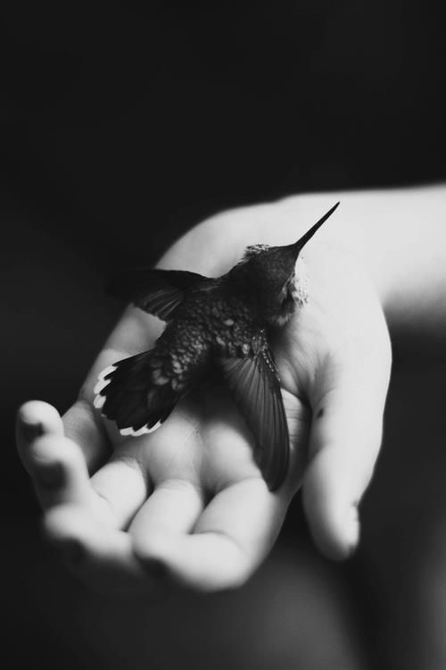 Once upon a time I held a hummingbird in my hand... fragility~(from the author)