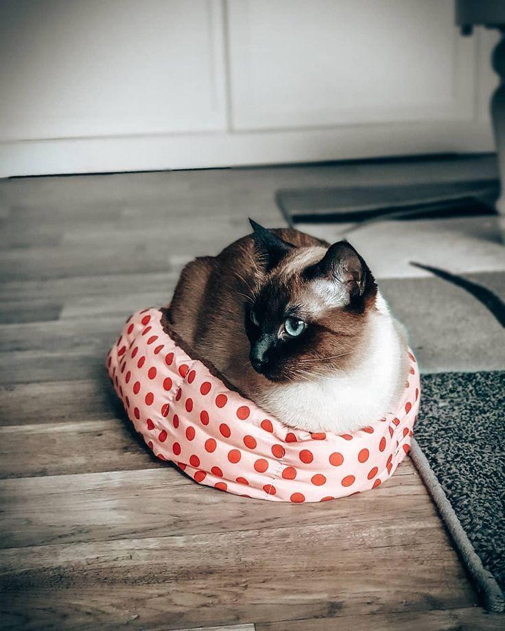 Wenn Mami In China Viel Zu Kleine Korbchen Bestellt Und Wir Trotzdem So Tun Mu Bestellt China Kleine Korbchen Mam In 2020 Baby Katzen Kleine Korbchen In China