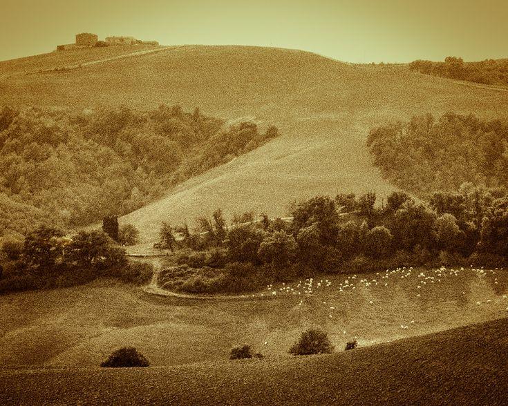 moutons-sheep_0667
