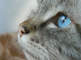 Behind blue eyes by RerinKin