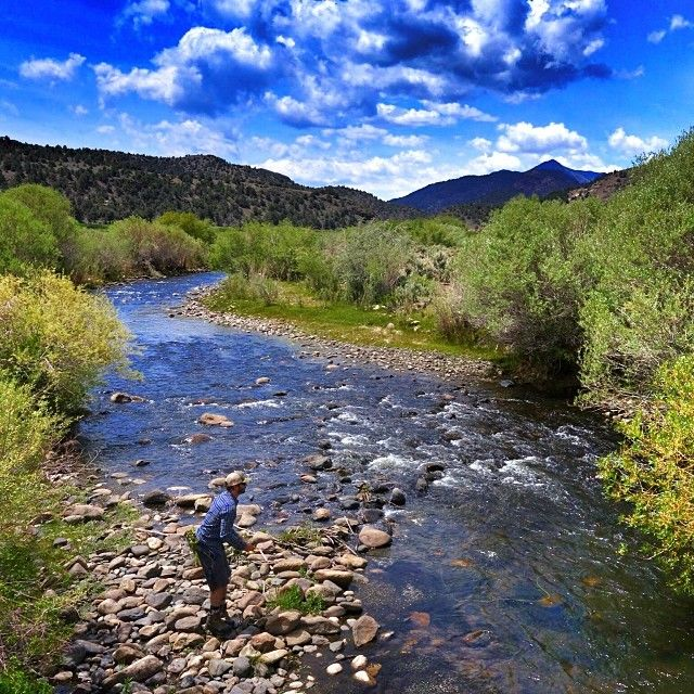 17 best images about food u s great basin western for Walker river fishing