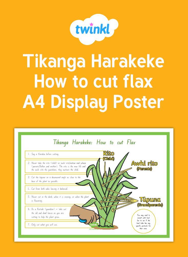 Tikanga Harakeke - How to cut flax