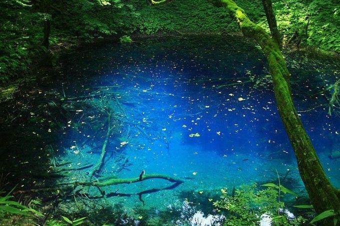 十二湖(じゅうにこ)は、青森県西津軽郡深浦町にある複数の湖の総称です。世界遺産にも登録されている、白神山地の一角で、津軽国定公園内にあります。どうして青池がここまで青いのか、いまだに科学的に解明されていないそうです…