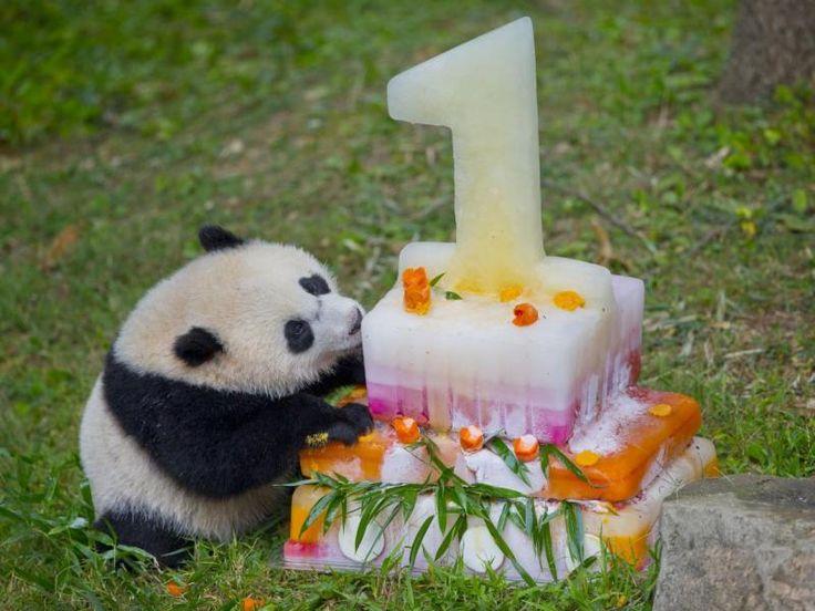 El primer cumpleaños de Bao Bao, la panda más querida.