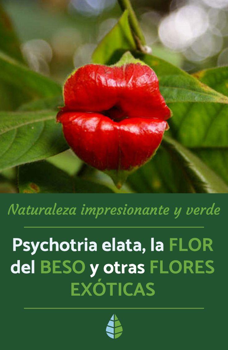 Nombres De Las Flores Más Exóticas Del Mundo Las Más Hermosas Cultivo De Flores Nombres De Flores Flores Exóticas