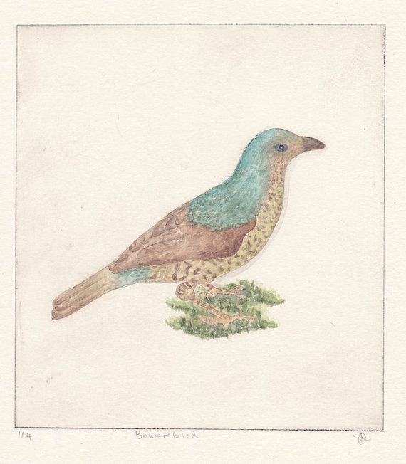 Bower Bird by JessicaParkerArt on Etsy