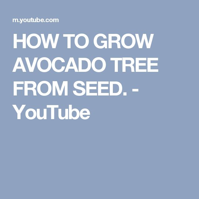 HOW TO GROW AVOCADO TREE FROM SEED. - YouTube