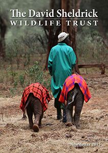 The David Sheldrick Wildlife Trust: A Haven for Elephants and Rhinos
