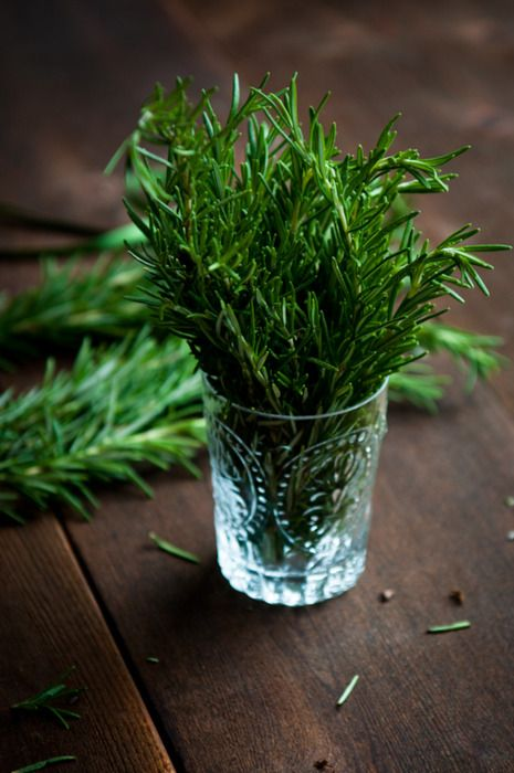 fresh rosemary: Dark Places, Italian Cooking, Herbs Gardens, You, Rosemary Plants, Gardens House, Pine Needle, Green Onions,  Flowerpot