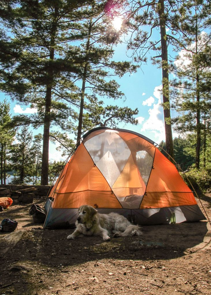 Memories of camping at the Highland Backpacking Trail with my Golden Retriever, Charlie. Algonquin Provincial Park. See link for story and pics. #camping #algonquinpark #goldenretriever