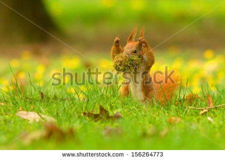 Hands up squirrel