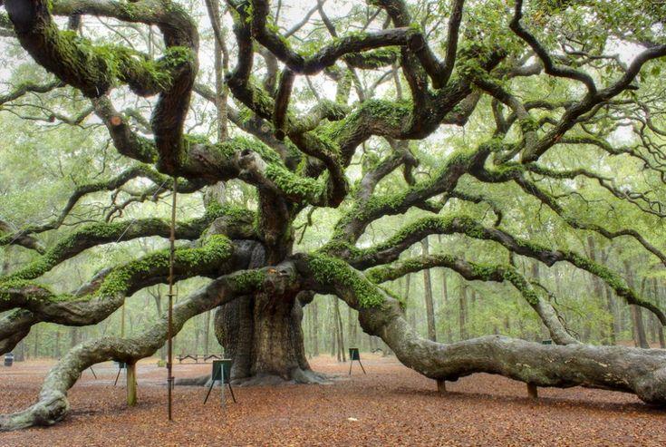 Il fascino di Central Park, a New York, o la maestosa bellezza della quercia denominata 'Angelo', appena fuori da Charleston, nel South Carolina.