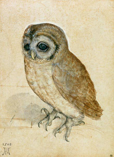 Bild:  Albrecht Dürer - Käuzchen