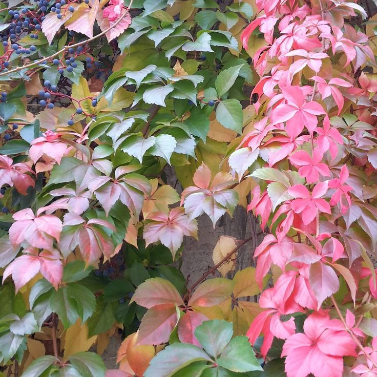 Ottobre  veste bene #carodiario #iomicito #poesia #frasi #pensierieparole #riflessioni #ottobre2016 #autunno#fogliesecche #foglie#colori#vestebene