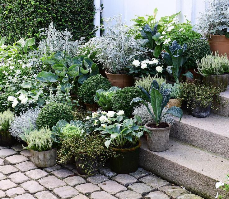 Plants on the steps