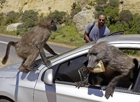 Remember to lock you car when you go to picnic site in National Park, otherwise .....