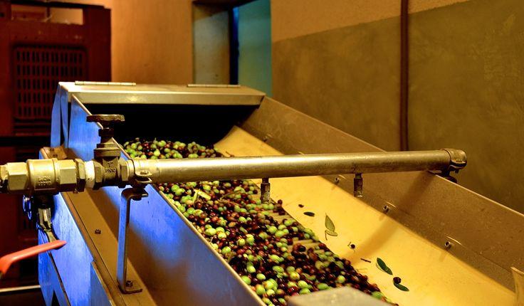 Lavage des olives