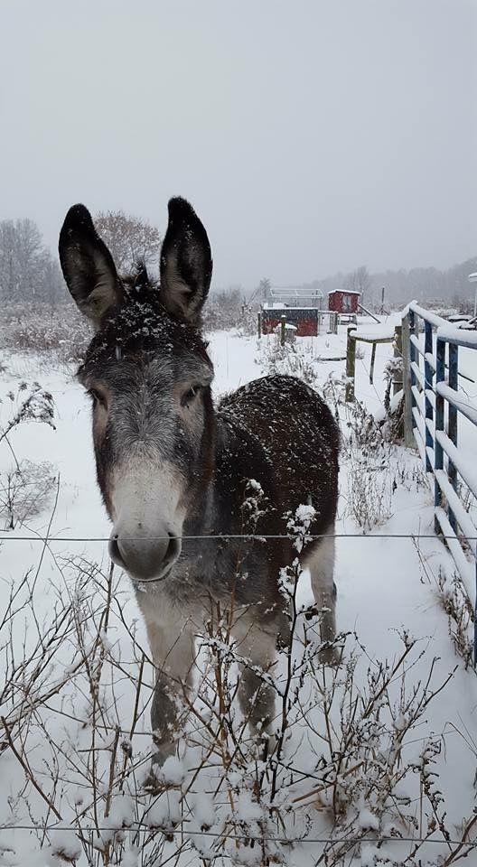 Allie Zimmerman ~ Only Donkeys