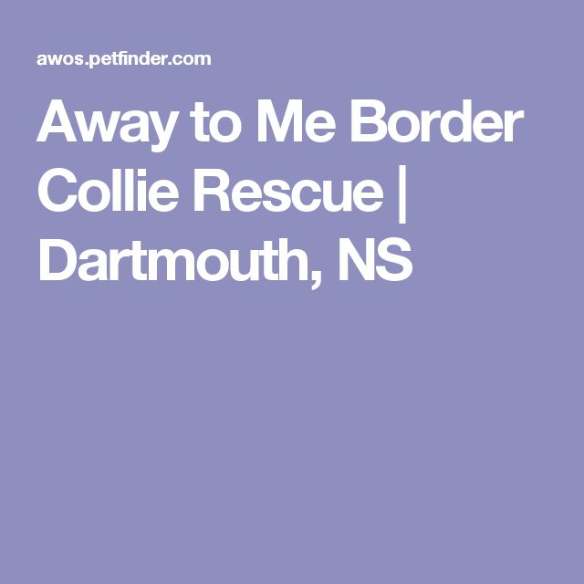 Away to Me Border Collie Rescue | Dartmouth, NS