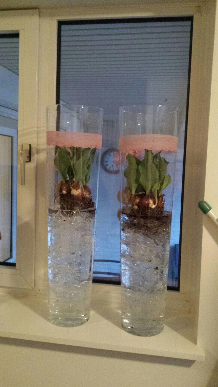 Tulpen op folie en water! 😍